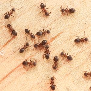 Structural Pest Management